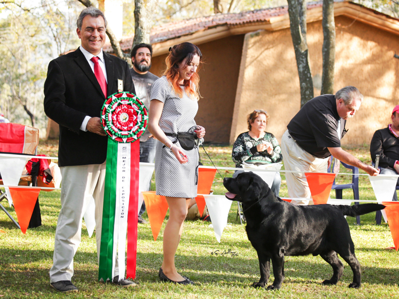 Best Of Breed at the Guadalajara Specialty in Mexico