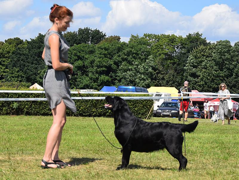 2 x International Dog Show in Sopot 2017 - 2 x CAC, 2 x Cacib, 2 x Best Female, 2 x BOB, BOG III