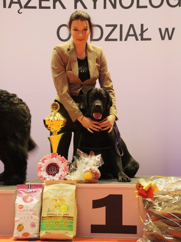 National Dog Show in Brodnica 04.02.2017 - puppy class, 1st, BOB Puppy, BIS Puppy I