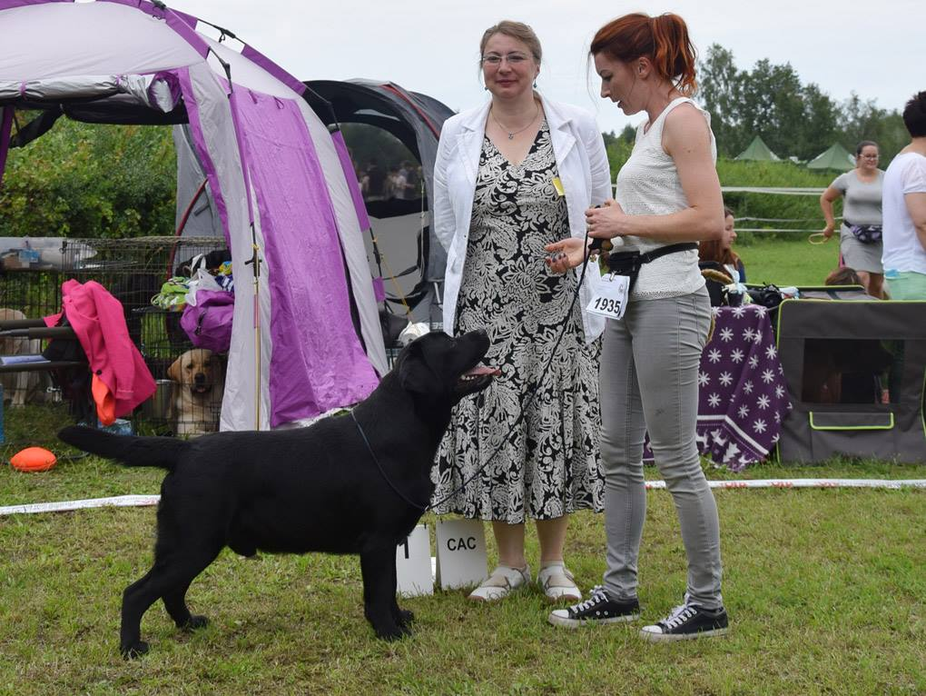 International Dog Show in Warsaw 08.07.2017 - intermediate class, 1st, CAC