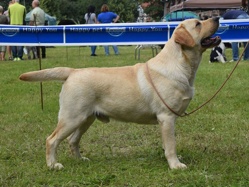 National DOg Show in Gdynia 16.07.2017 - intermediate class, 1st, CAC, Best Male, BOB