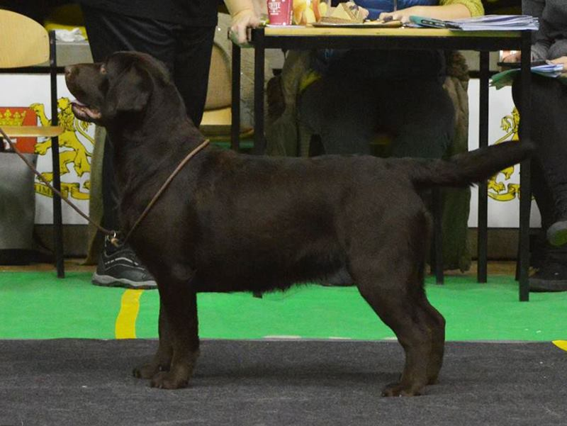 National All Breed Show in Gdańsk 08.01.2017 -  junior class, 2nd, excellent