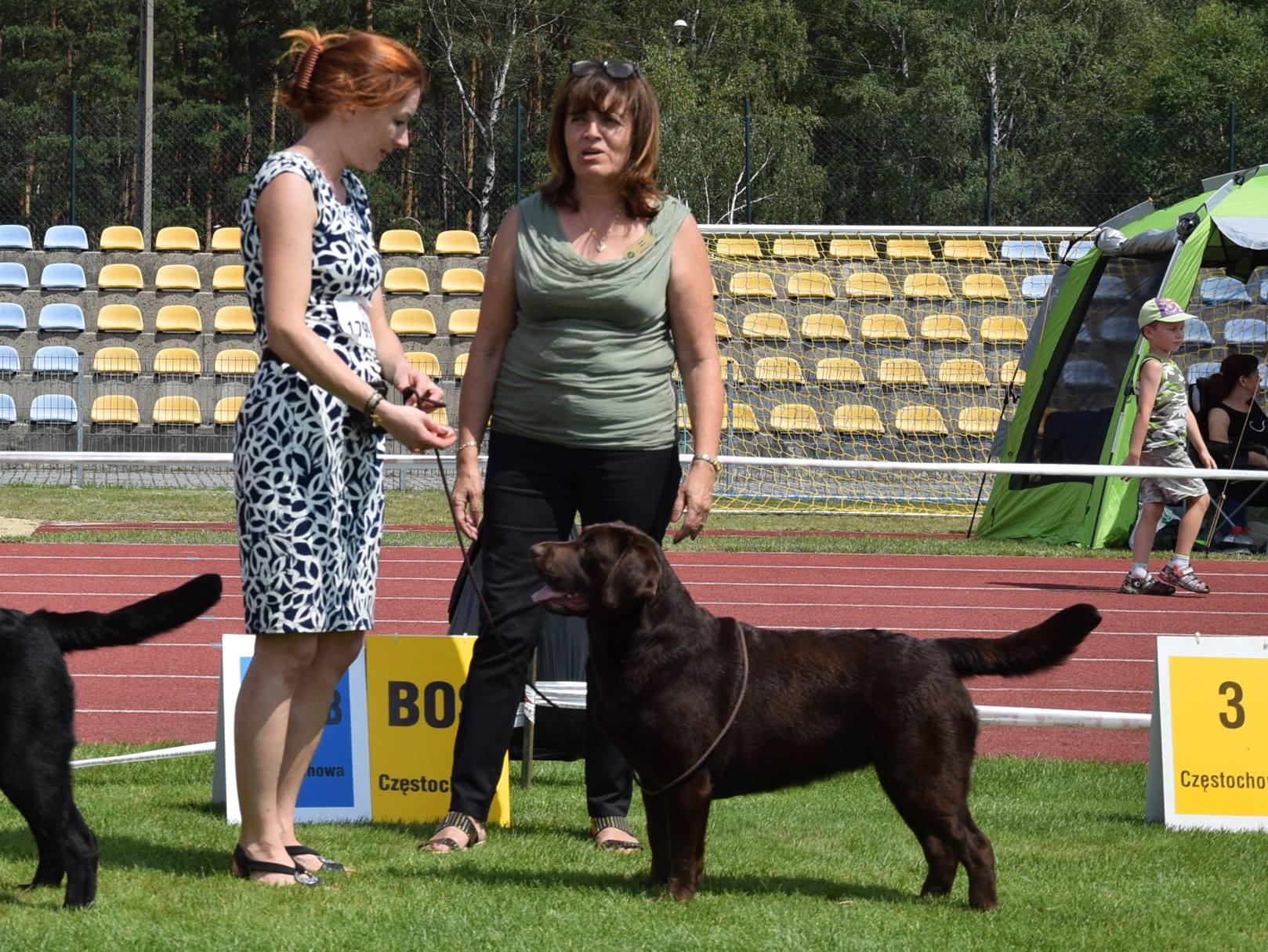 International Dog Show in Częstochowa 22.07.2017 - open class, 1st, CAC, Cacib ,Best Female, BOS