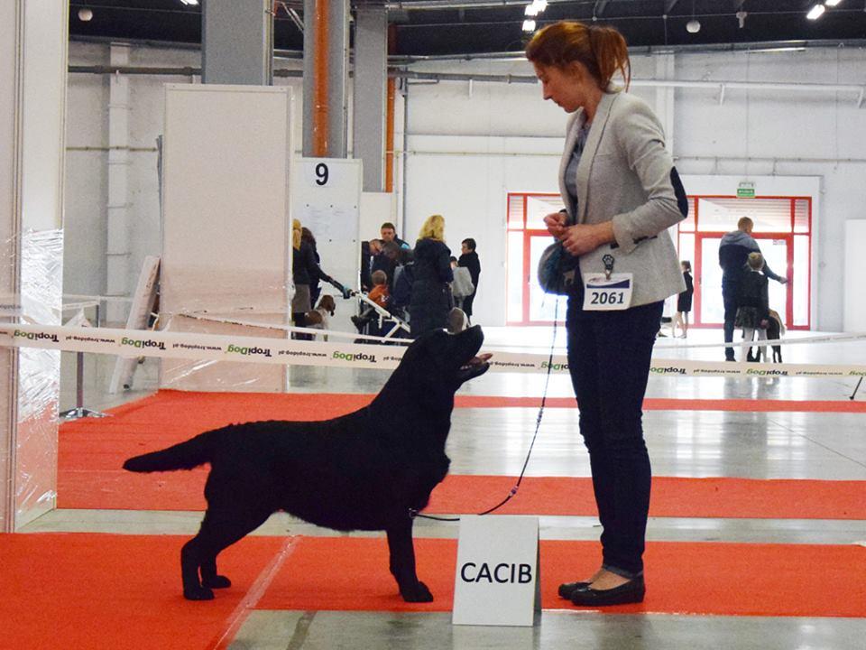 International Dog Show in Kielce 24.11.2017 - champion class, 1st, CAC, Best Female, Cacib, BOS