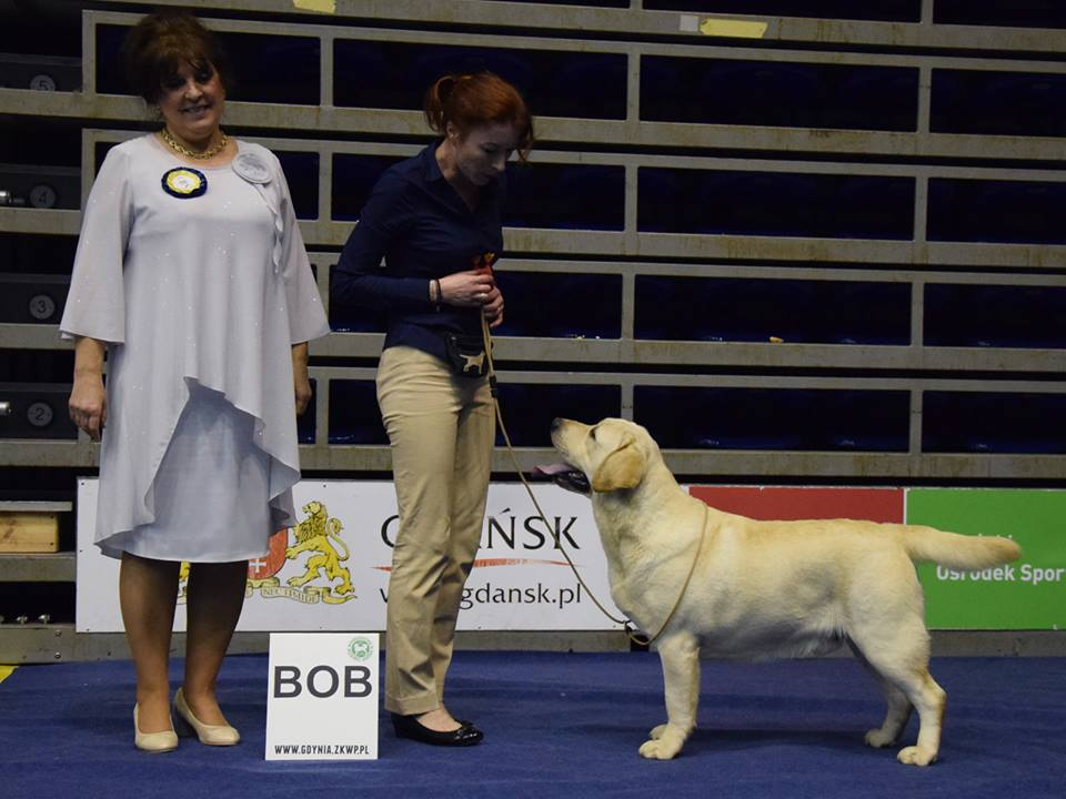 National Dog Show in Gdańsk 07.01.2018 - junior class, 1st, Junior Winner, BOB Junior, BOB, BOG II