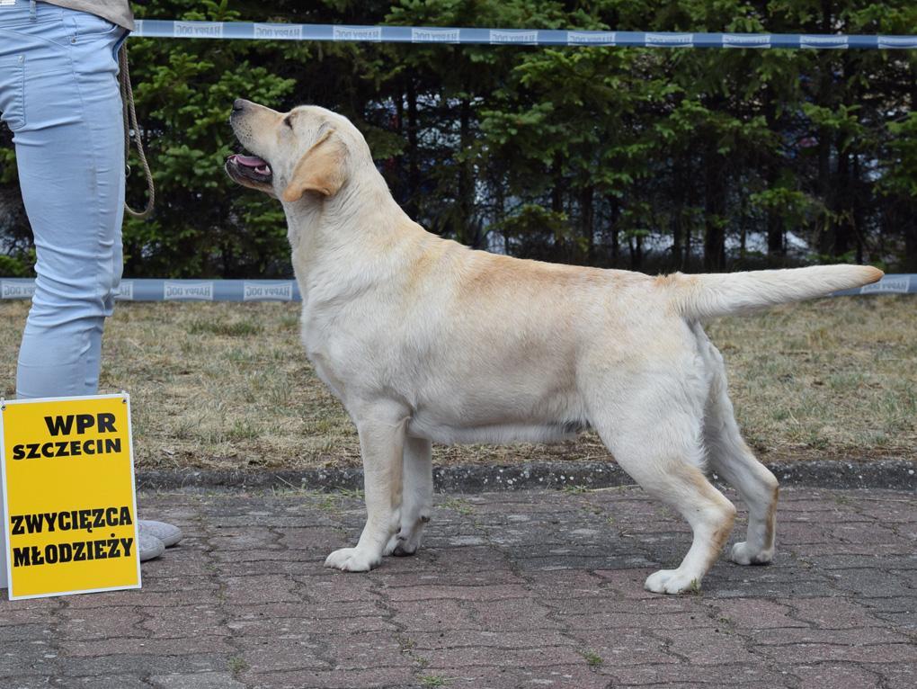 International Dog Show in Szczecin 30.06.2018 - junior class, 1st, Junior Winner, BOB Junior
