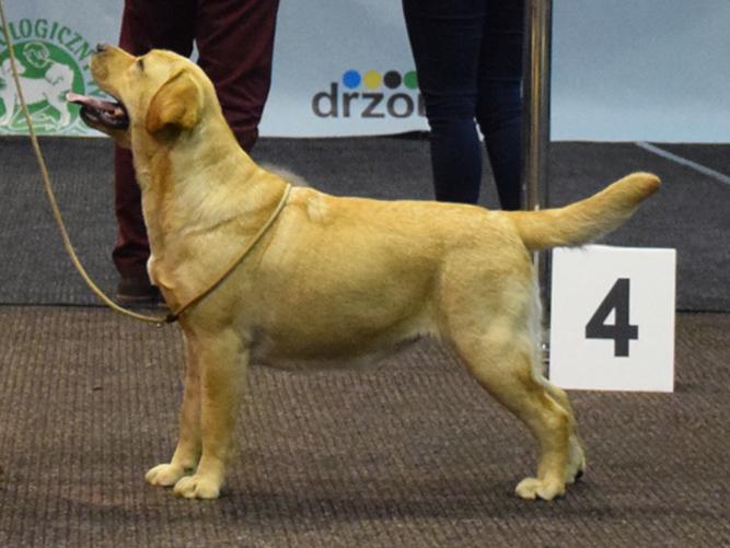 15 months - CAC, Cacib, Best Female, BOS - International Dog Show in Zielona Góra 2018