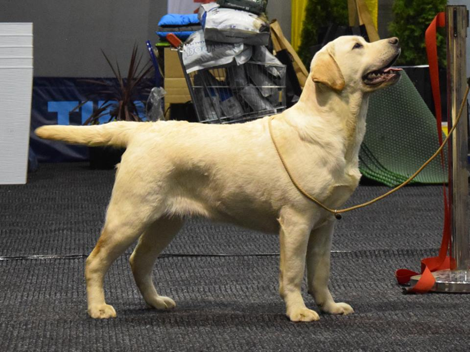 International Dog Show in Drzonków 02.03.2018 - junior class, 4th, excellent