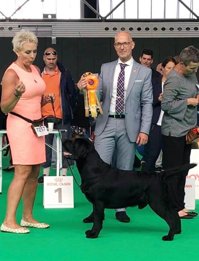 World Dog Show Amsterdam 2018 - junior class, 1st, Junior WInner, BOB Junior = Junior World Winner 2018