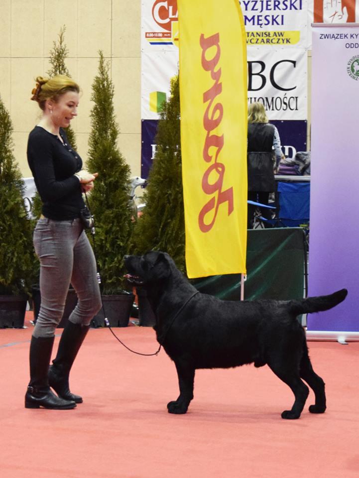 National Dog Show in Brodnica 12.01.2019 - intermediate class, 1st, CAC, Best Male, BOB