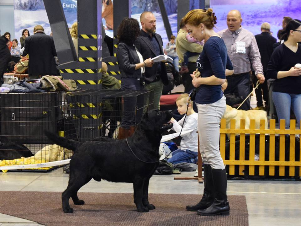 International Dog Show in Katowice 09.02.2019 - intermediate class, 1st, CAC, res.Cacib