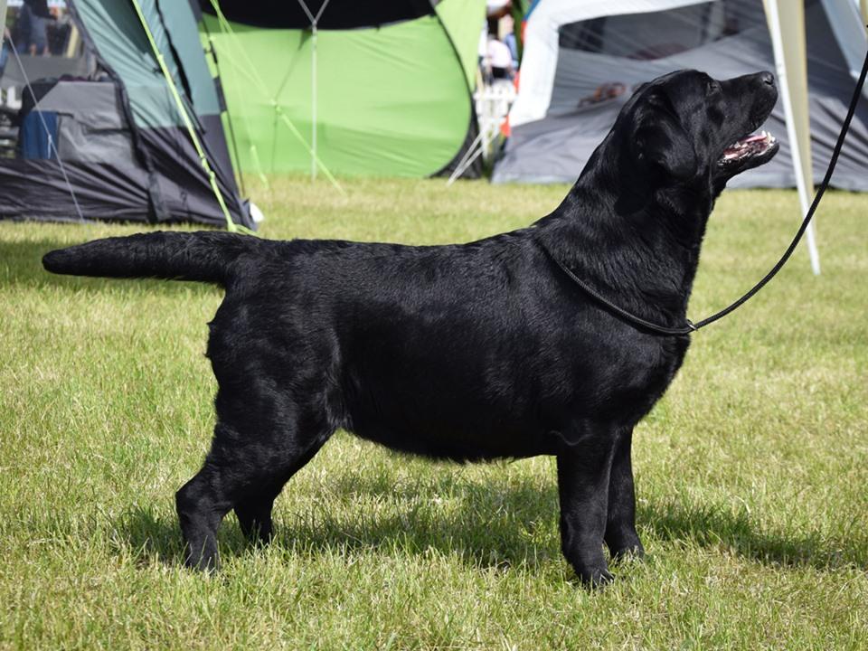 National Dog Show in Łąck 15.06.2019 - junior class, 1st, Junior Winner