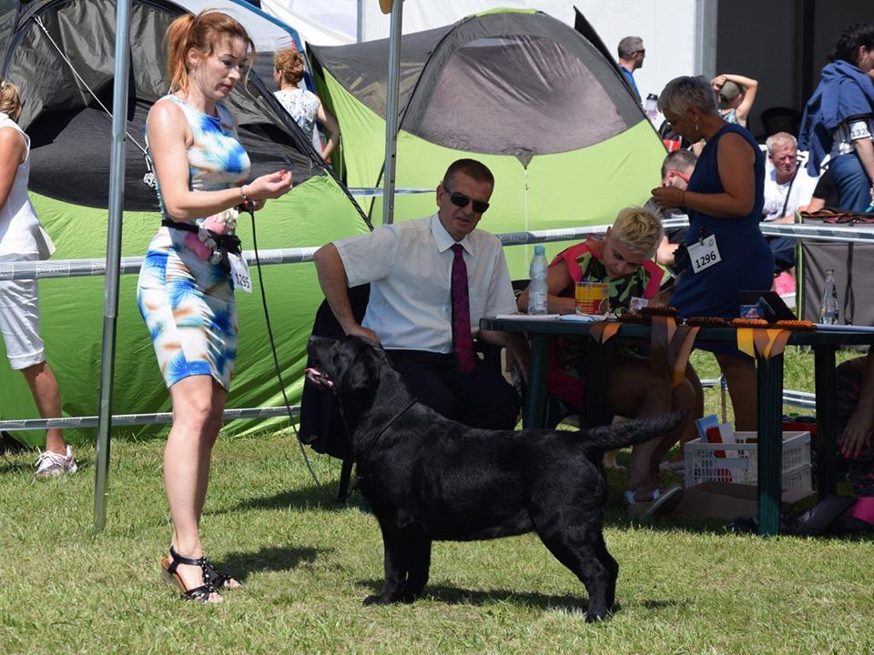 International Dog Show in Szczecin 23.06.2019 - junior class, 3rd, excellent