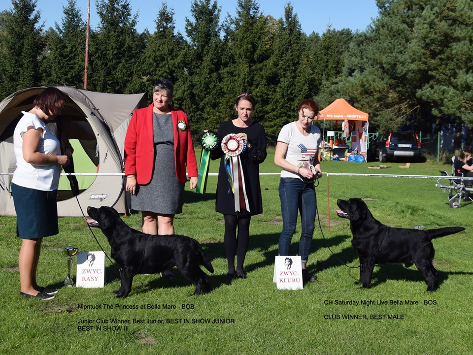 Retriever Club Show in Poland 22.09.2019 - open class, 1st, CAC, Best Male, BOS